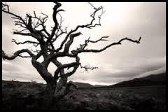 Depression In Seniors Black Tree